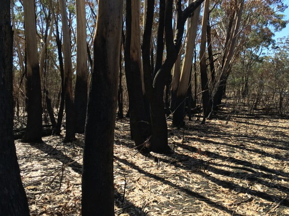 Scorched, Hargraves Lookout