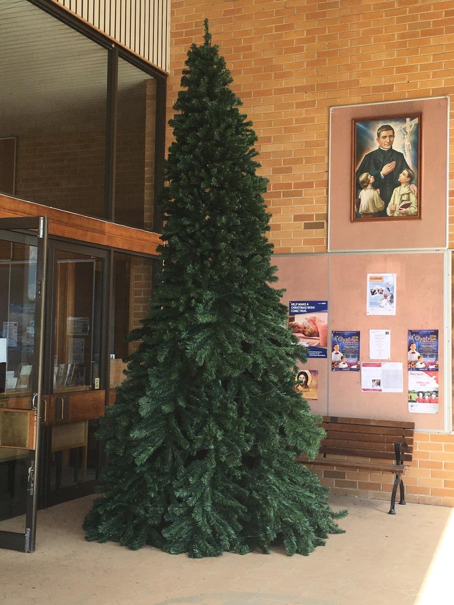 Unadorned Christmas Tree