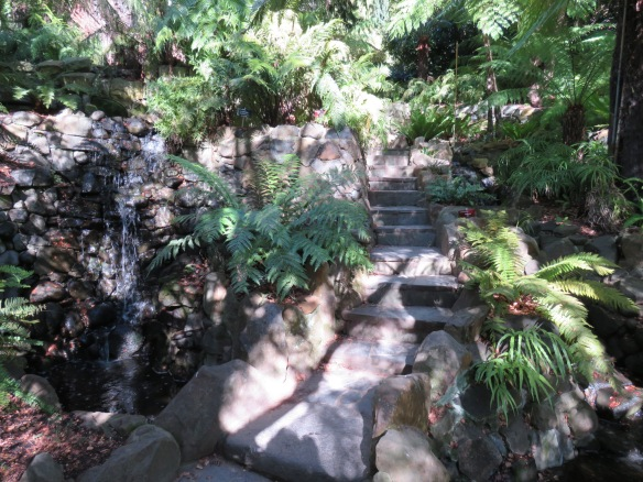 Ferns and waterfalls at the Royal Tasmanian Botanic Gardens