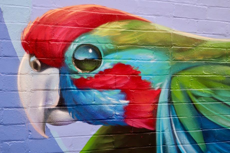 Bird mural in Froma Lane, Katoomba