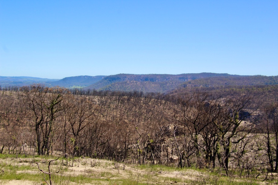 Landscape near Bell after the bushfires